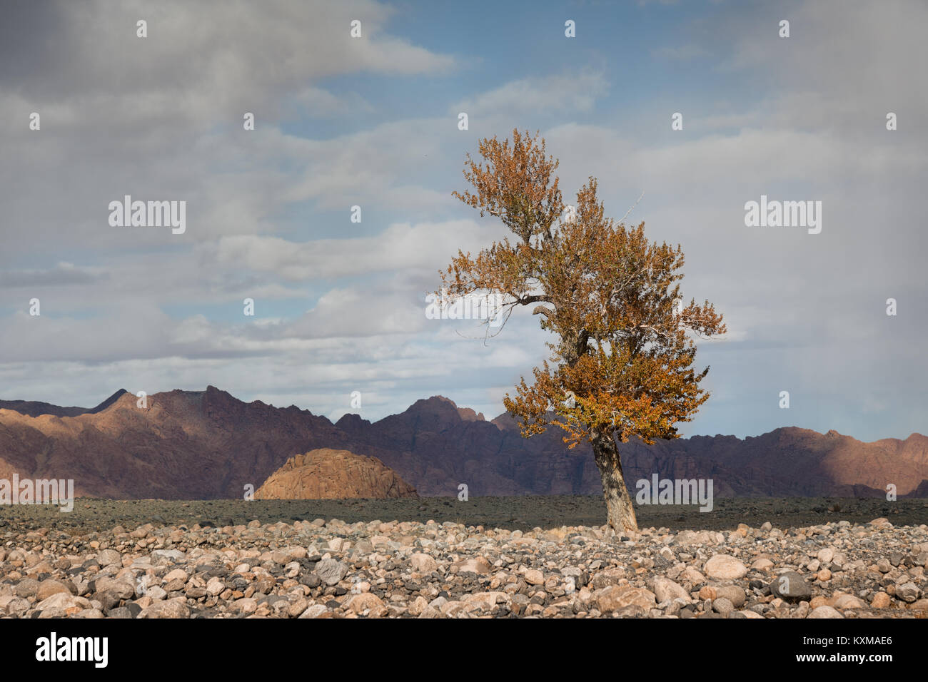 Mongolia yellow leafs tree fall landscape river bank - Stock Image