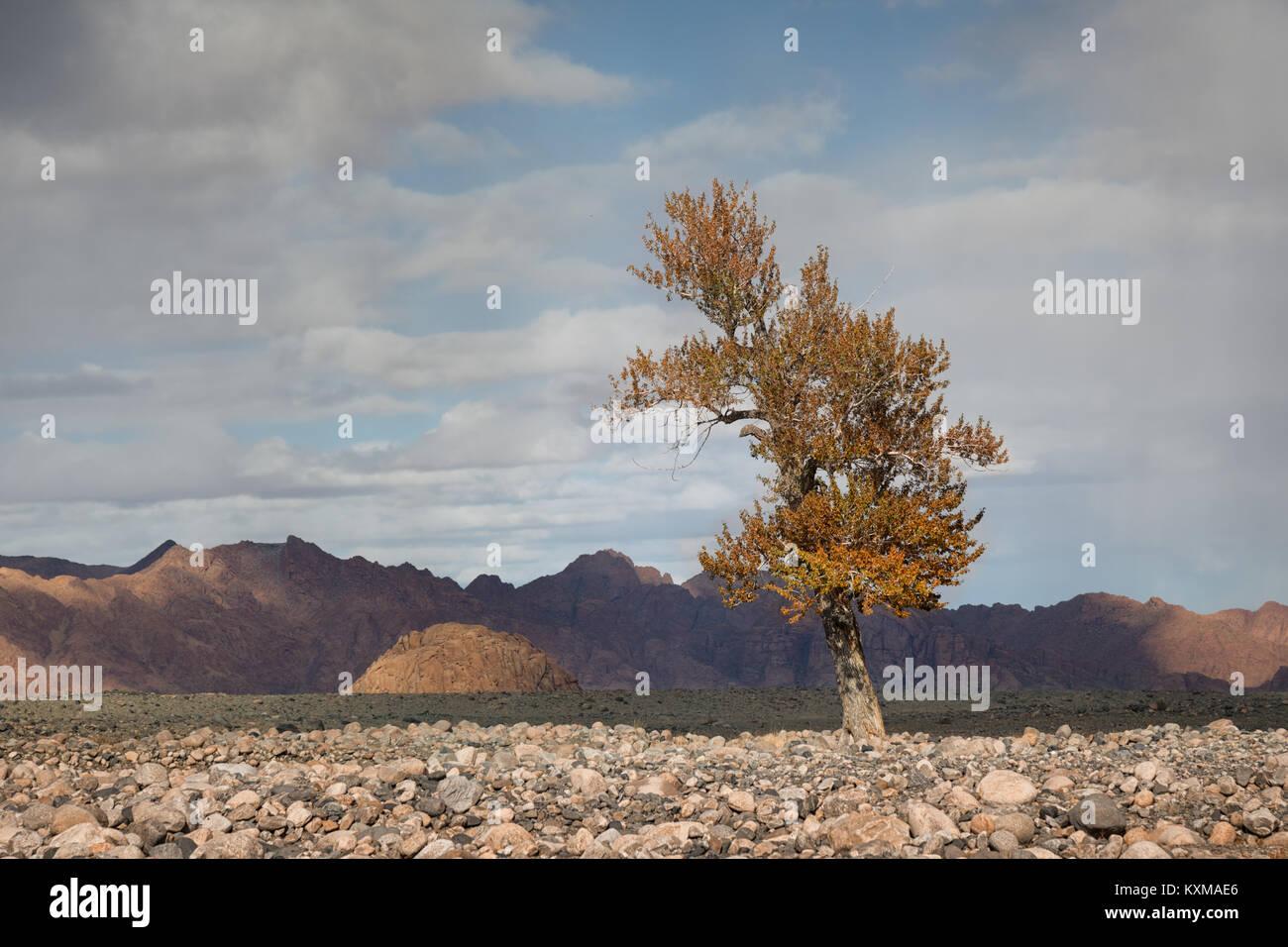 Mongolia yellow leafs tree fall landscape river bank - Stock Image
