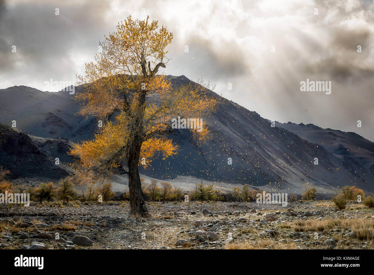 Mongolia yellow leafs tree fall landscape river bank sun rays - Stock Image