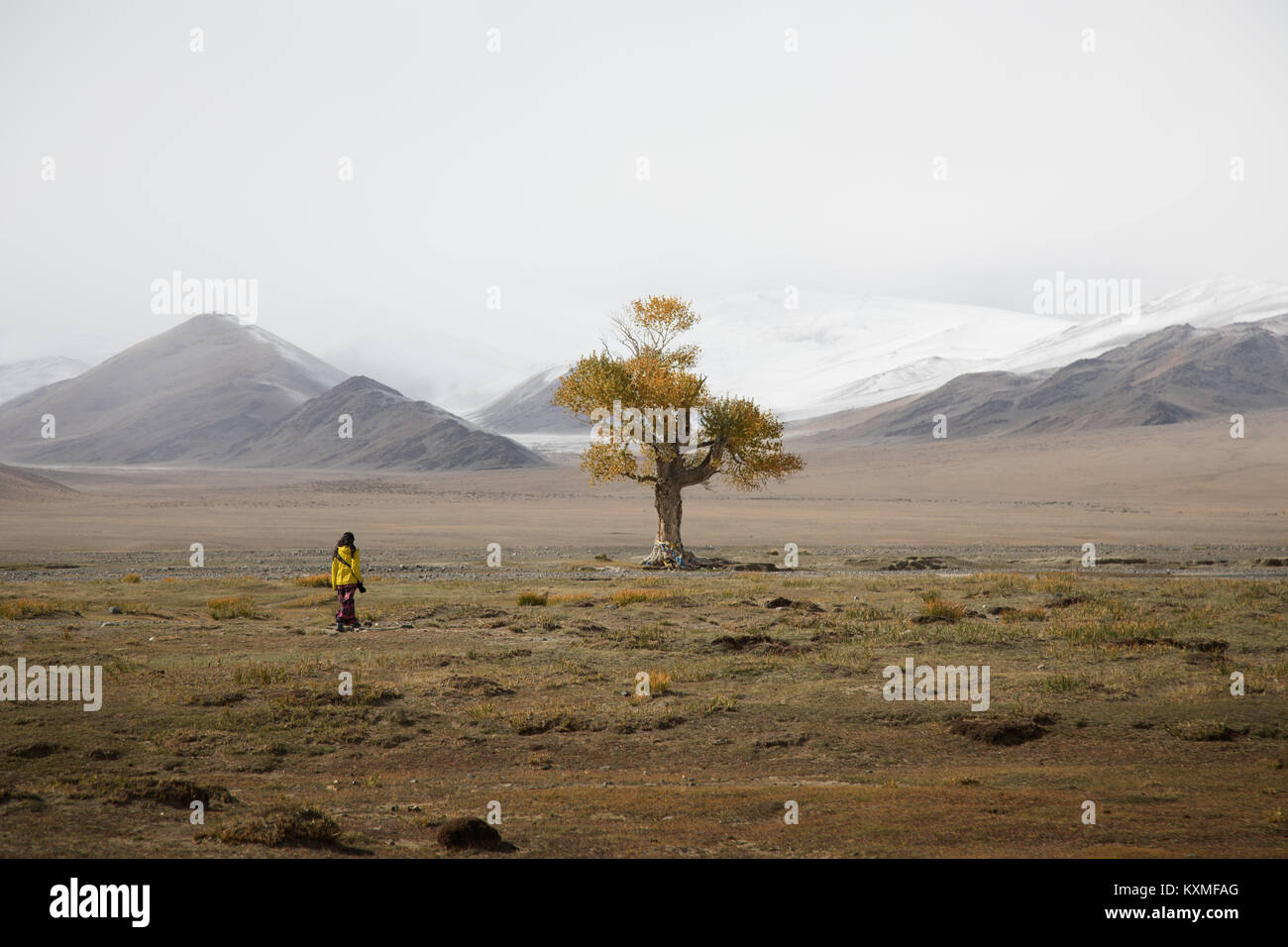 Lonely tree fall yellow leafs cloudy foggy winter snowy mountains Mongolia steppes grasslands - Stock Image