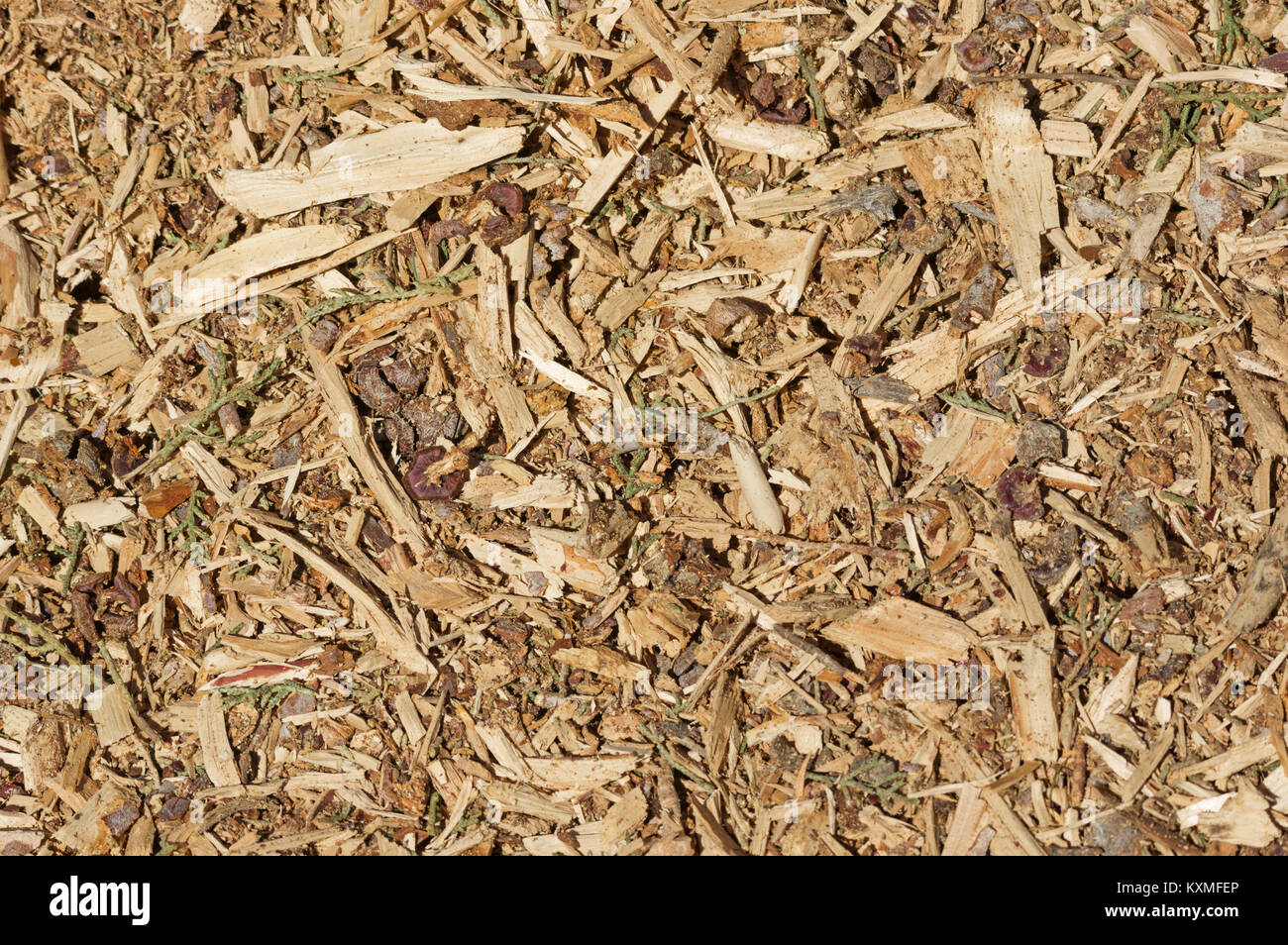 organic mulch background with wood chips bark and leaves Stock Photo