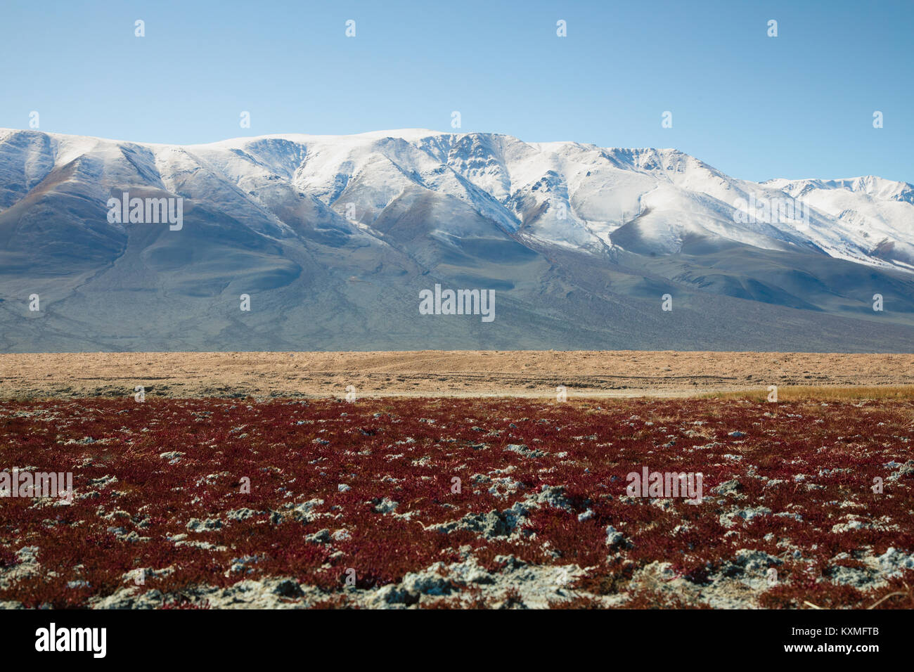 Snowy mountains red grass plants Mongolia steppes grasslands - Stock Image