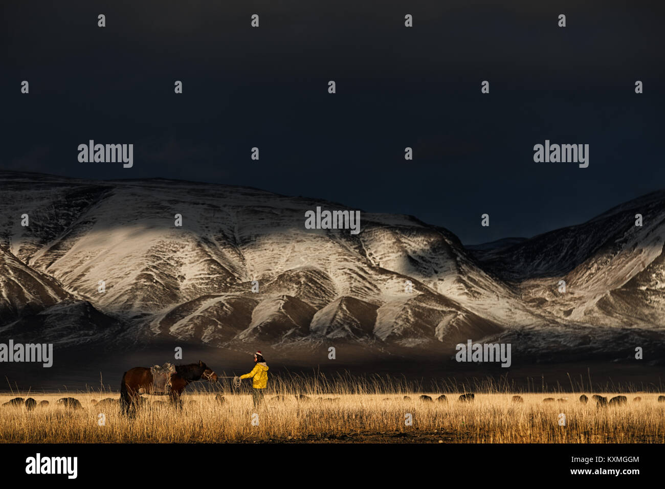 Horse planted on his tracks snowy mountains Mongolia goats herd winter steppes grasslands - Stock Image