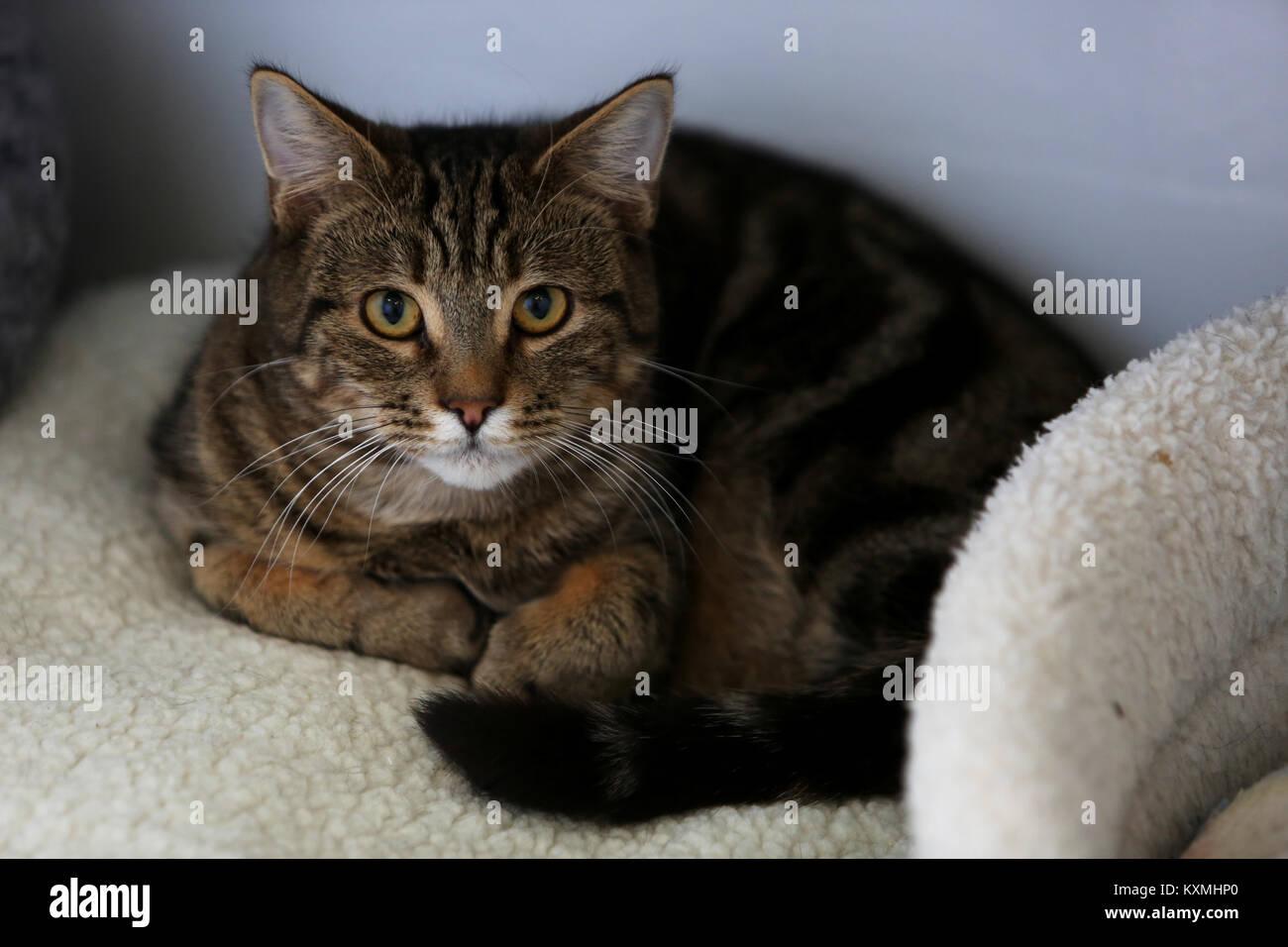 Cat And Rabbit Rescue Sidlesham