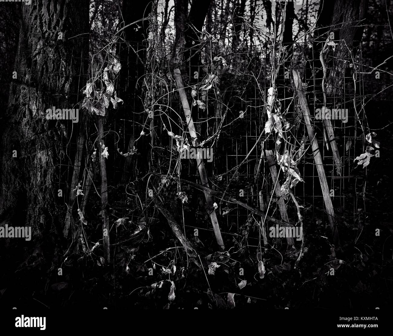 Plants Roots and Vines Monochromatic - Stock Image