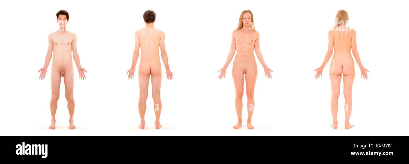 Anatomía superficial del hombre y de la mujer Stock Photo: 171334885 ...