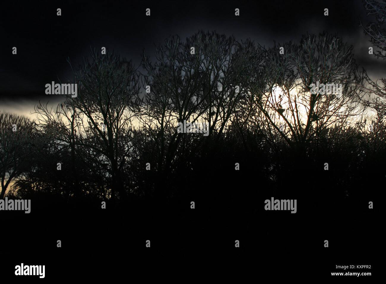 Baumlandschaft - Stock Image