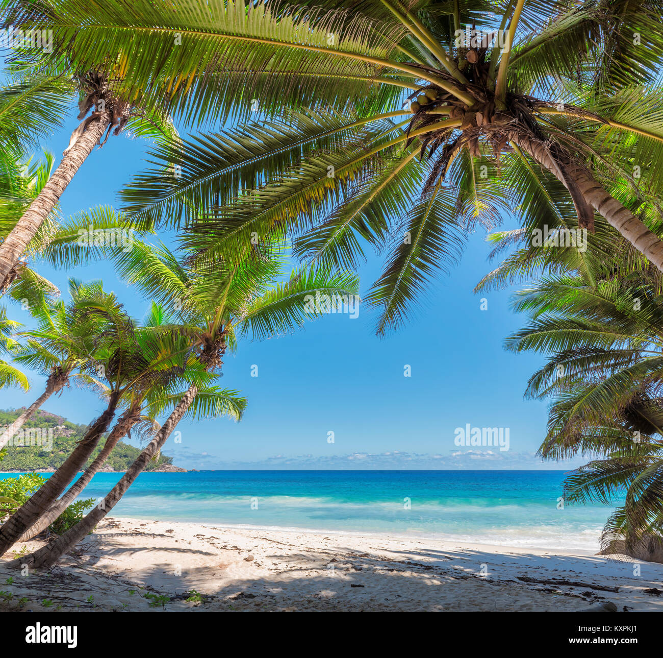 Coconut Palm trees on tropical island. - Stock Image