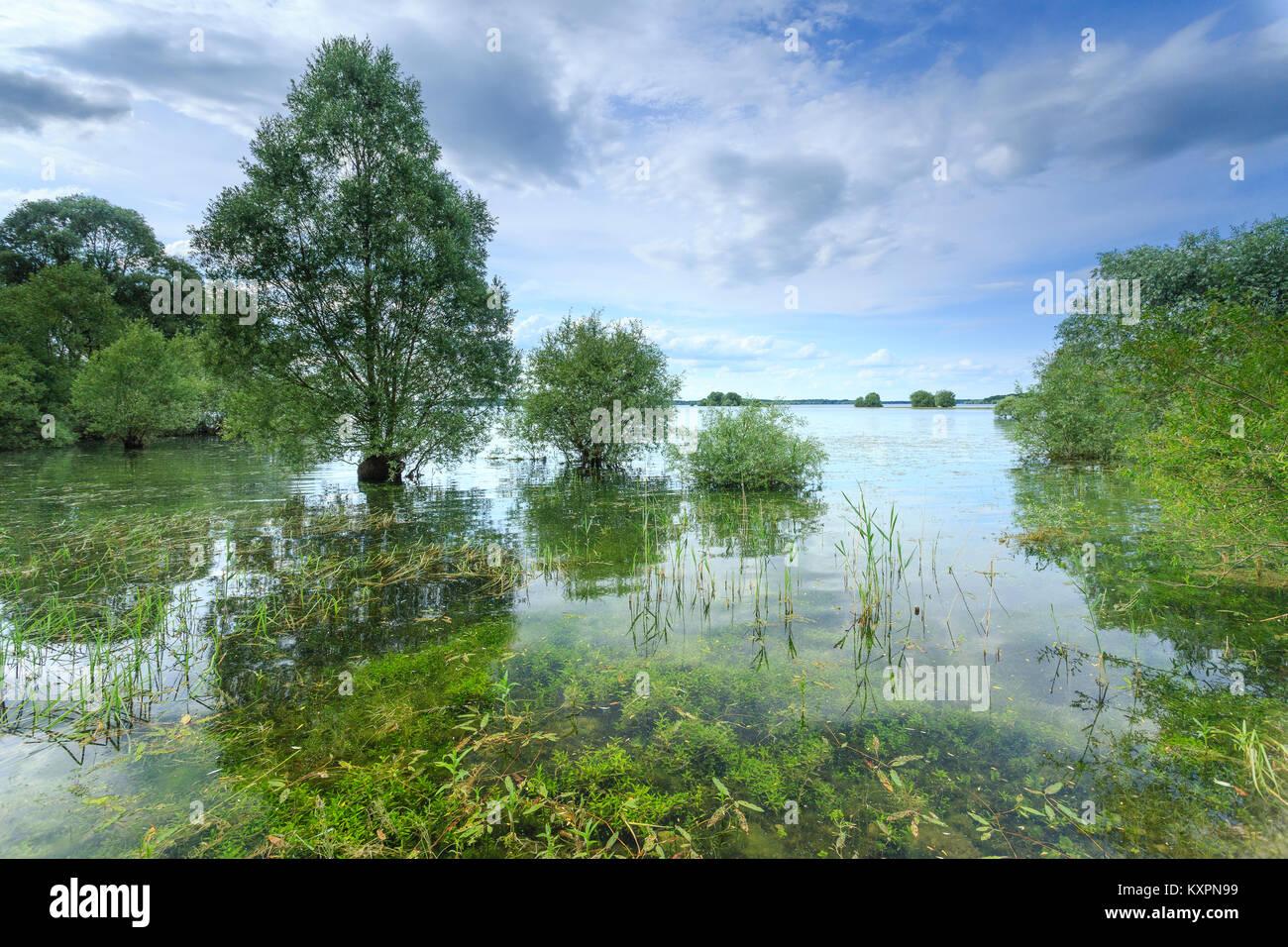 France, Aube (10), Champagne, Parc naturel régional de la Forêt d'Orient, lac d'Orient // France, - Stock Image