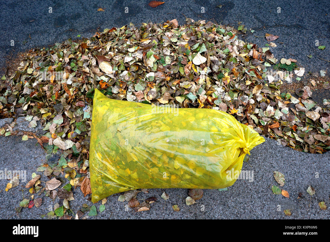 streets filled with garbage how to fix