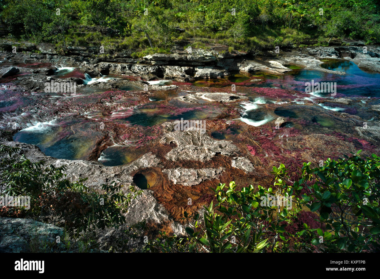 Colorful endemic freshwater plants known as macarenia clavigera create colorful natural tapestries at Los Ochos - Stock Image