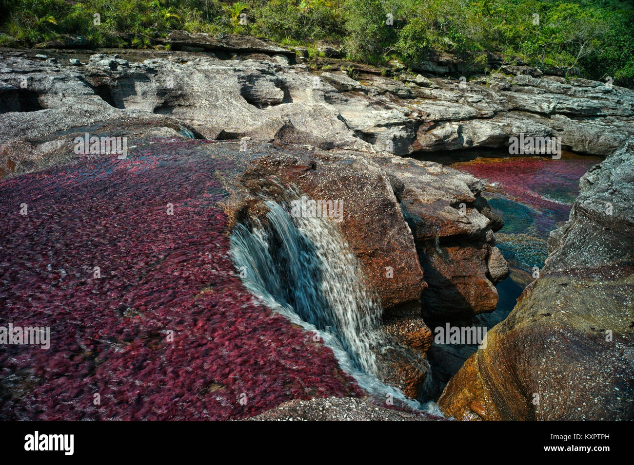 Cano Cristales river, commonly called the River of Five Colors or the Liquid Rainbow. Colorful endemic freshwater - Stock Image
