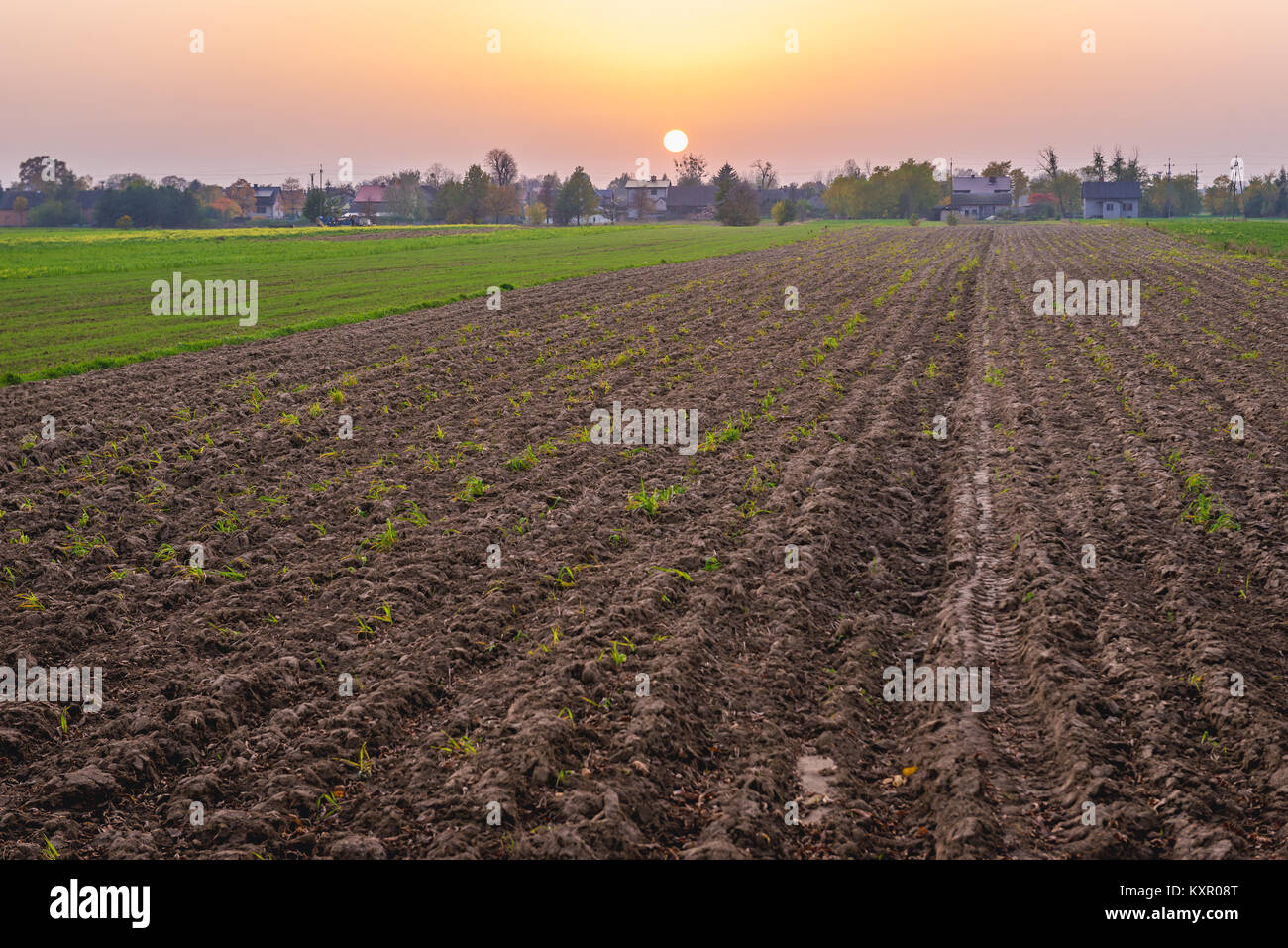 Sunset over winter cereal fields in Brochow village, Sochaczew County in Masovian Voivodeship of Poland - Stock Image