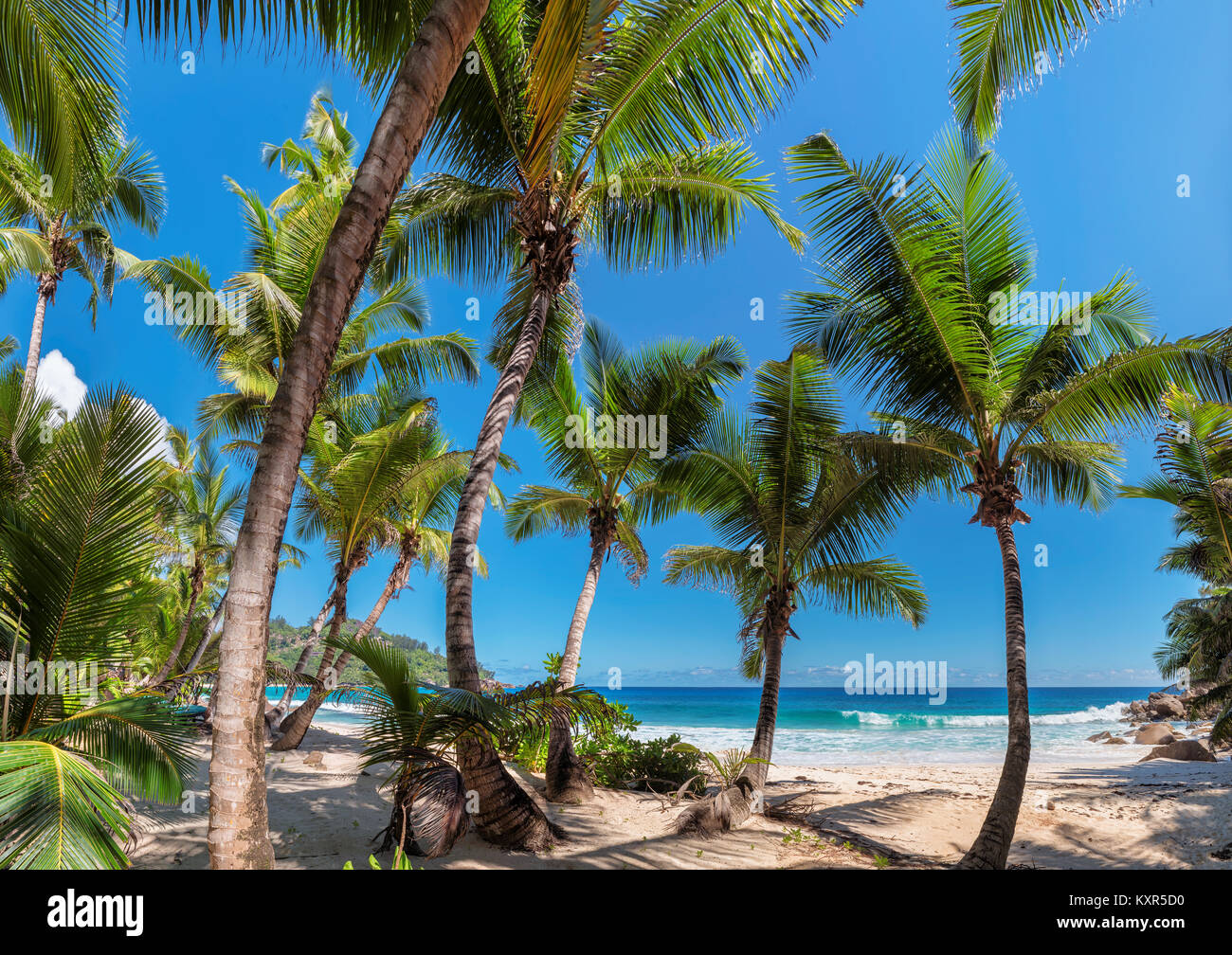 Coconut palm trees on tropical beach in Seychelles. - Stock Image