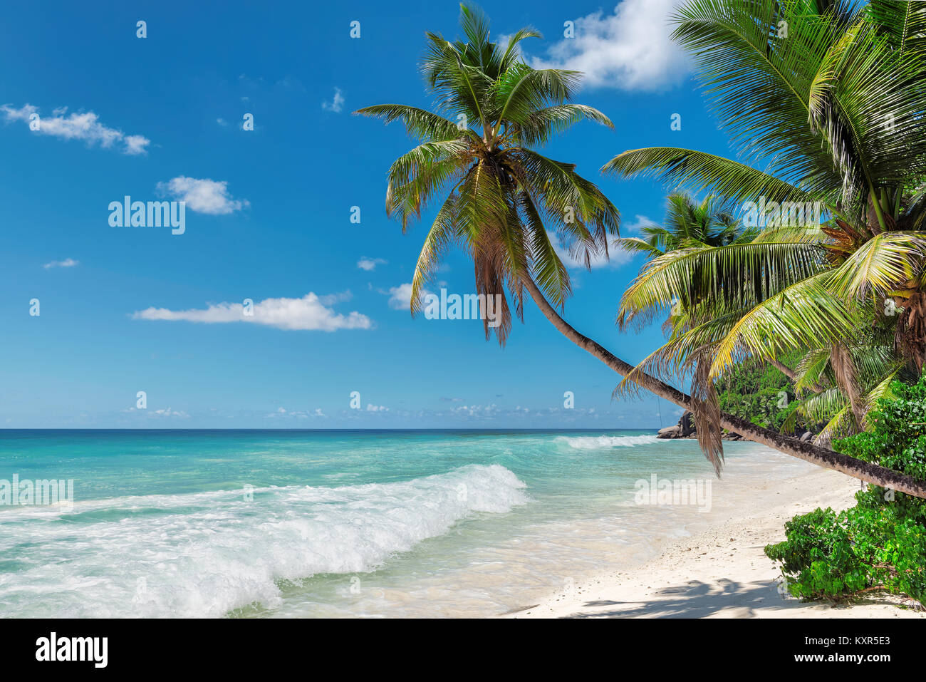 Palm trees on exotic tropical beach. Summer holiday and vacation concept background. - Stock Image