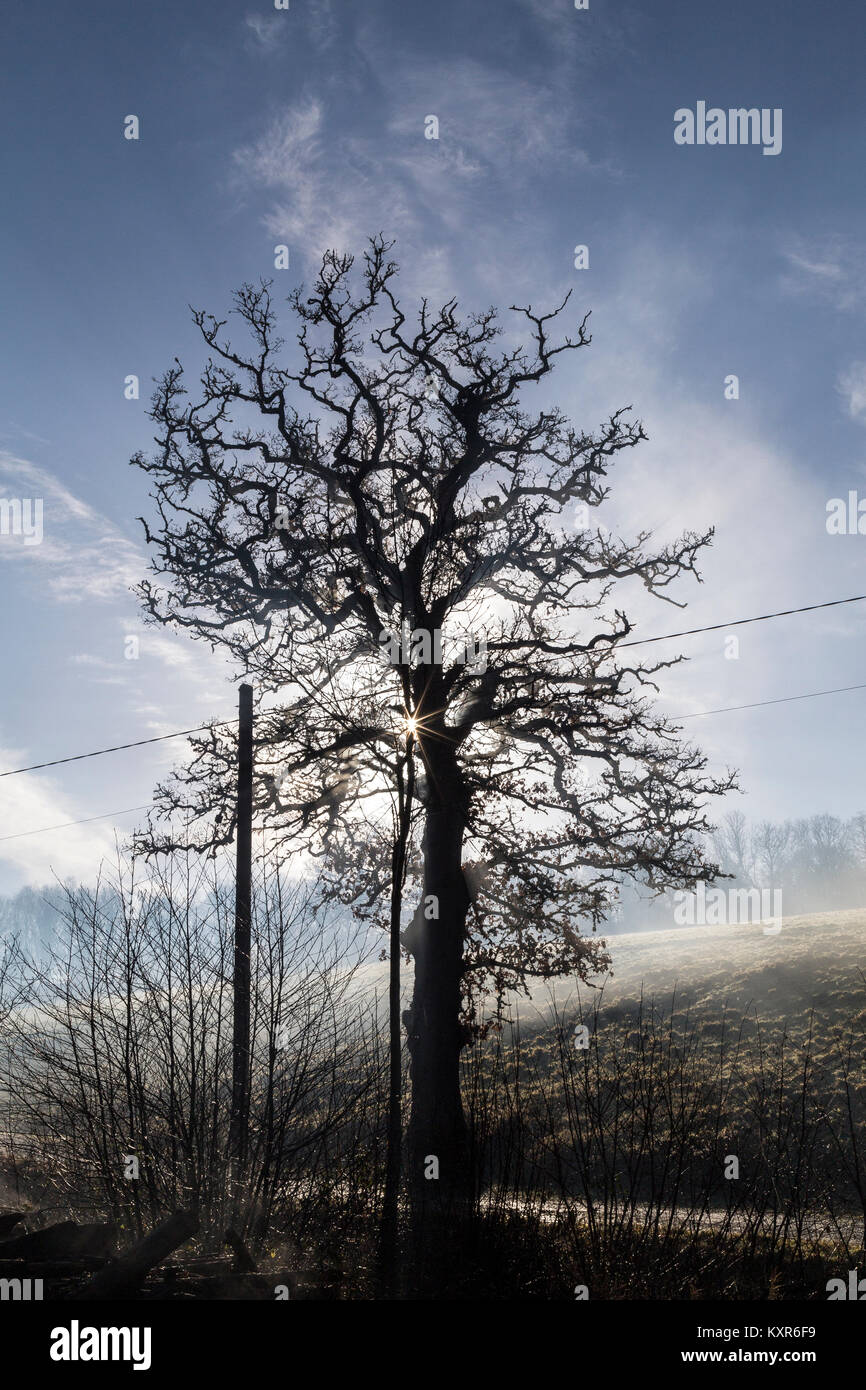 misty morning in Devon,to rain in fine drops; drizzle; mist.haze, fog, smog, murk, cloud, cloudiness, mistiness, - Stock Image