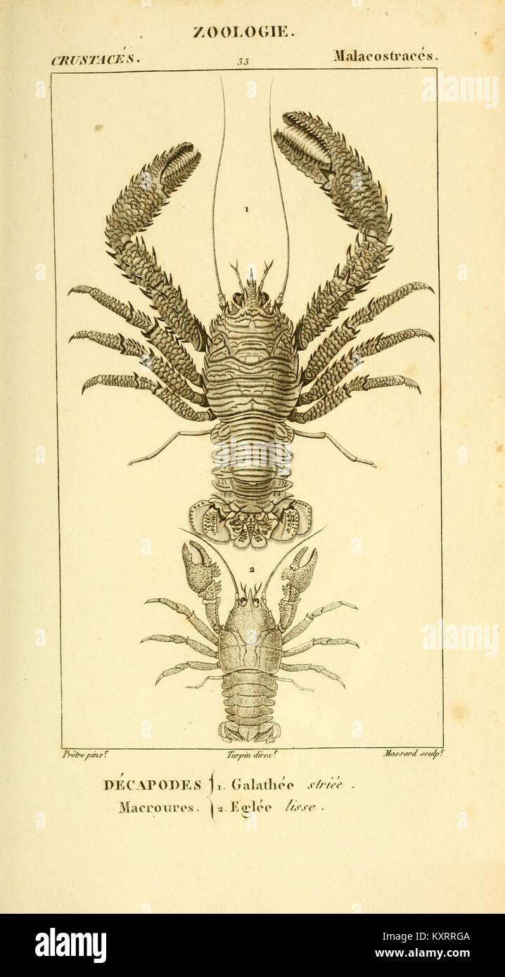 Considérations générales sur la classe des crustacés (Plate 33) (8613528070) Stock Photo