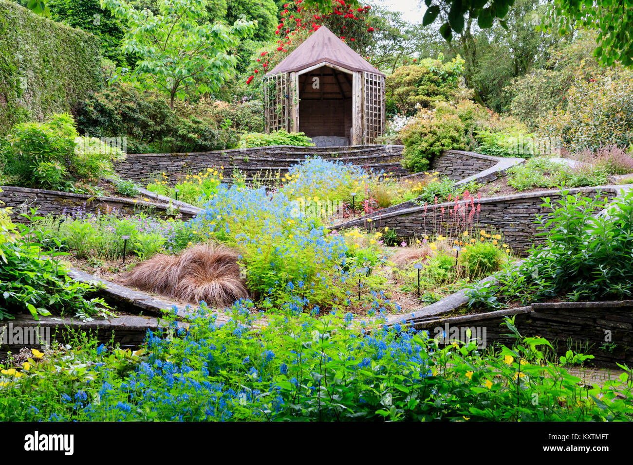Late spring view of the Ovals Garden at The Garden House, Buckland Monachorum, Devon, UK, with a blue river of Corydalis - Stock Image