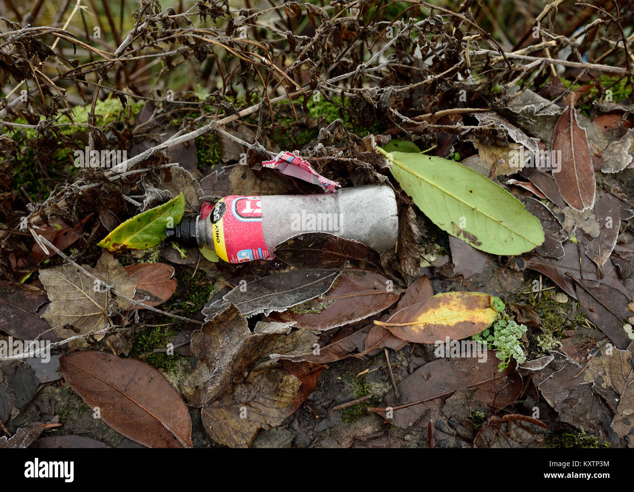 Plastic bottle and rubbish thrown away in countryside among rotting leaves - Stock Image