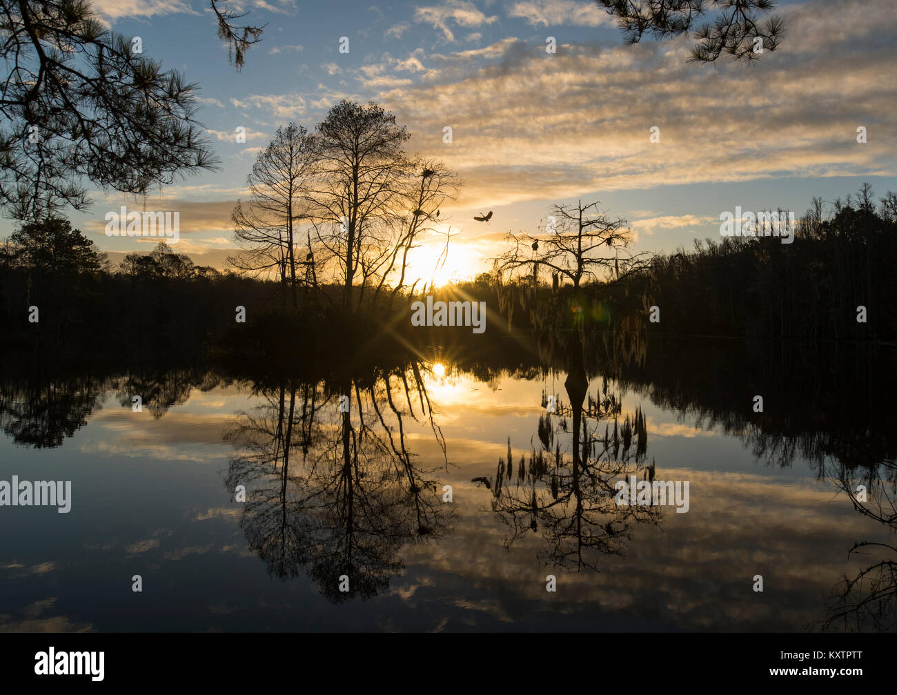 Morning Sun Over Pond - Stock Image