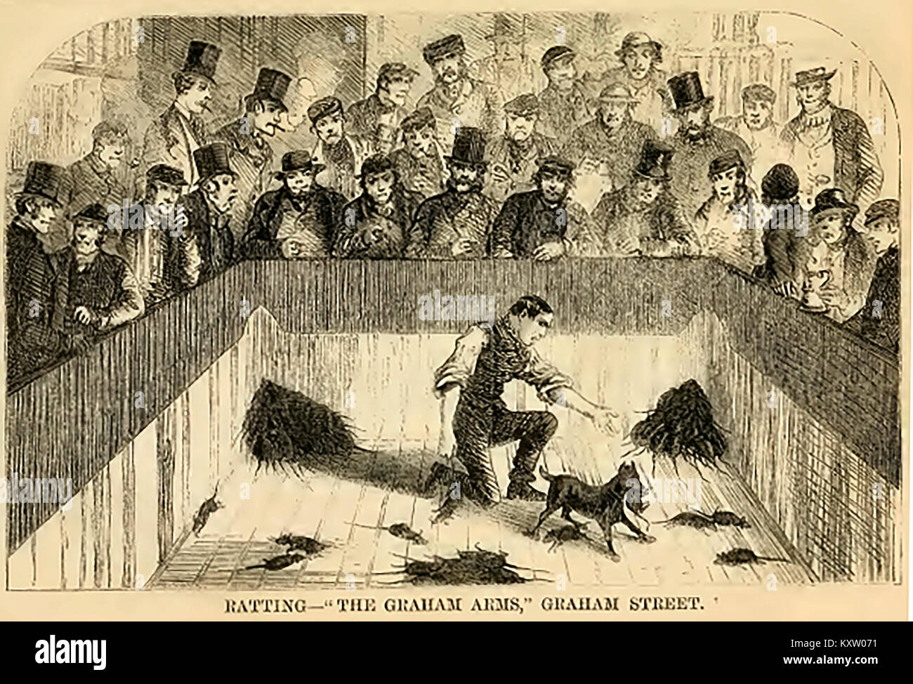 Blood sports in Victorian England - The  Ratting pit at the Grahams Arms, Graham Street,  London - Stock Image