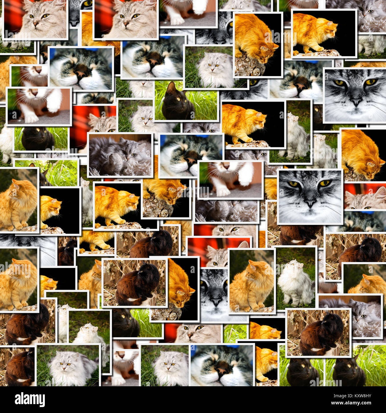 Collage several cats pictures - Stock Image