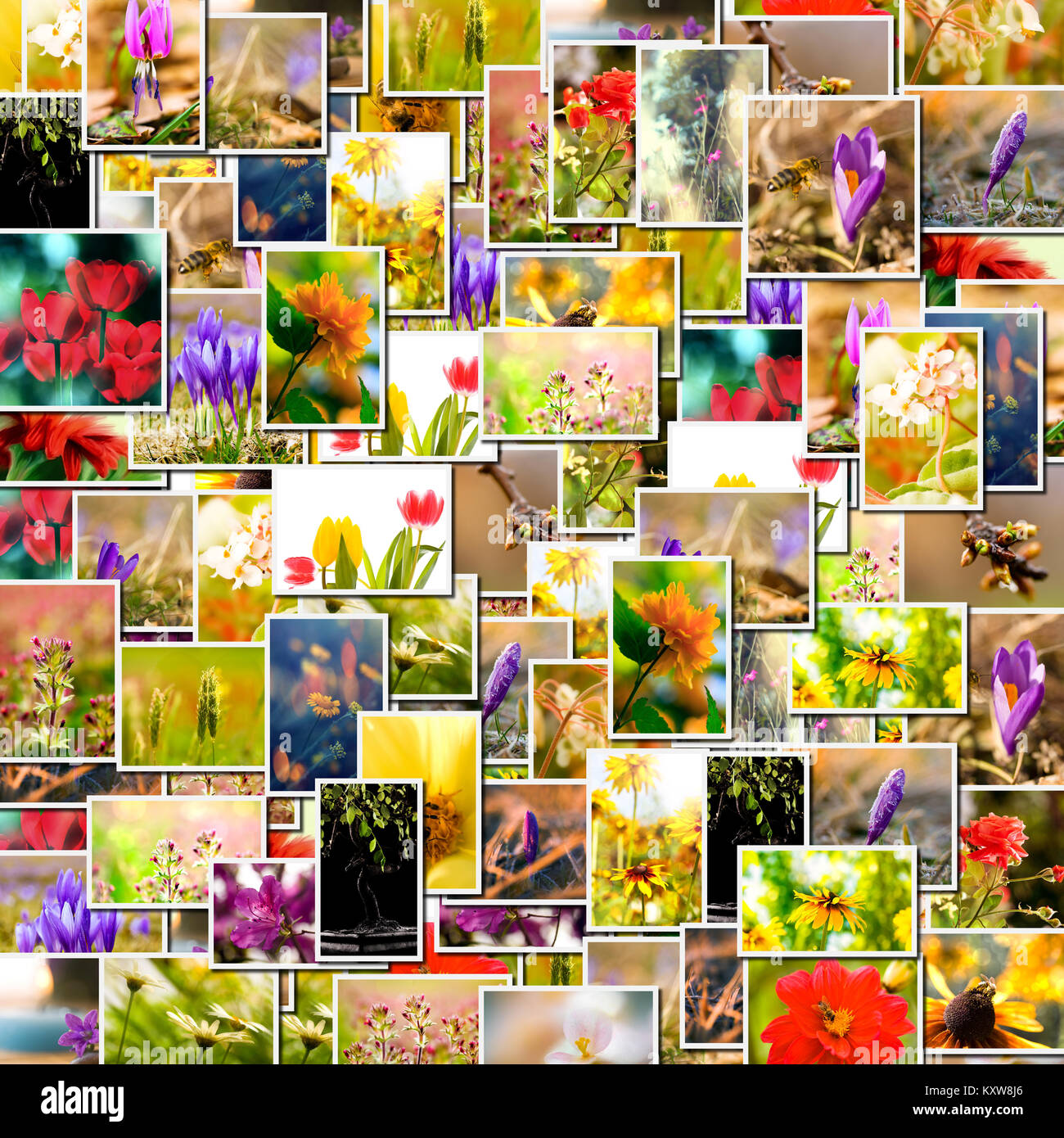 Flower collage. spring background, floral montage from several images Stock Photo