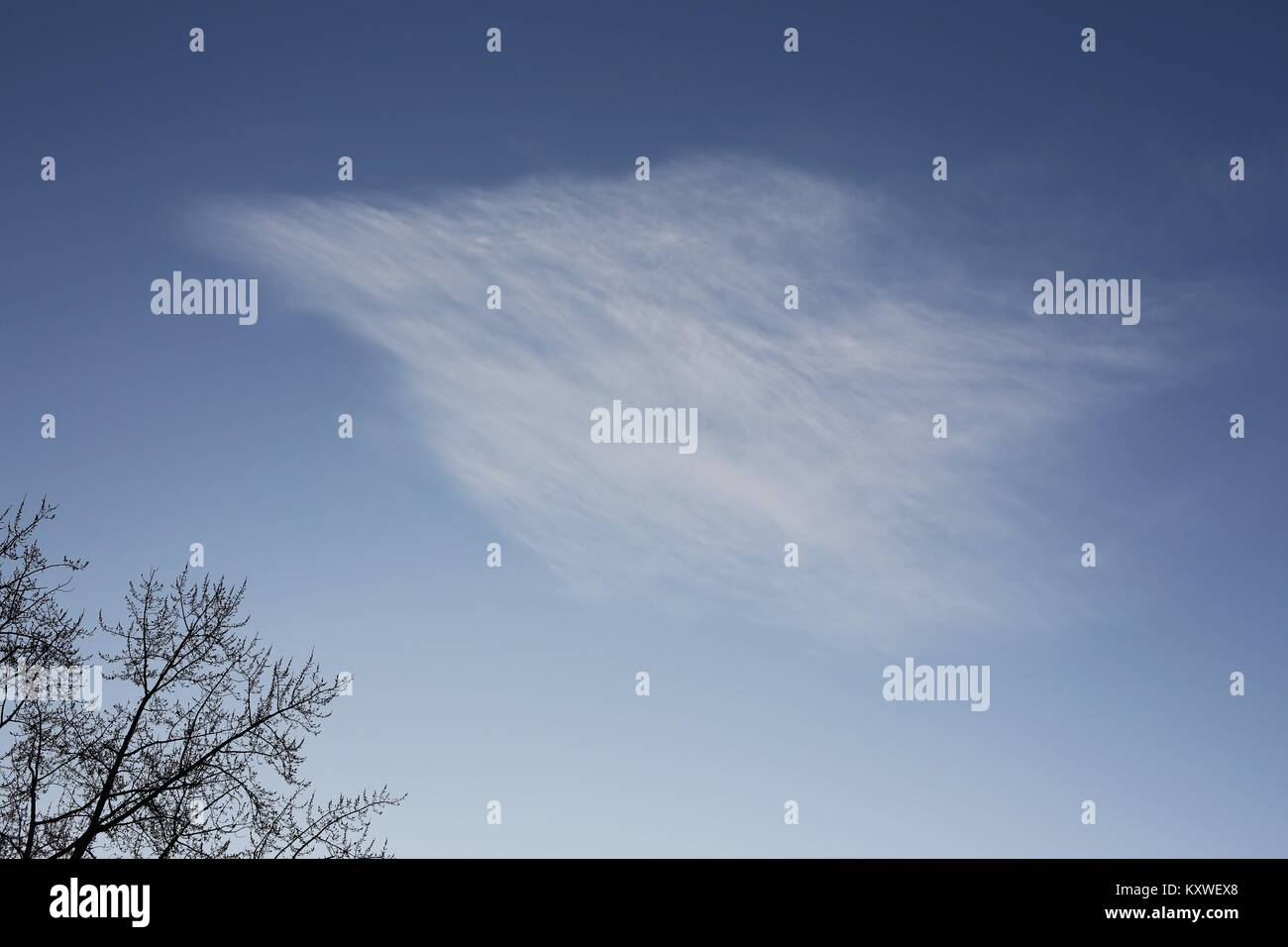 A wing shaped wispy cloud over a bare tree. - Stock Image