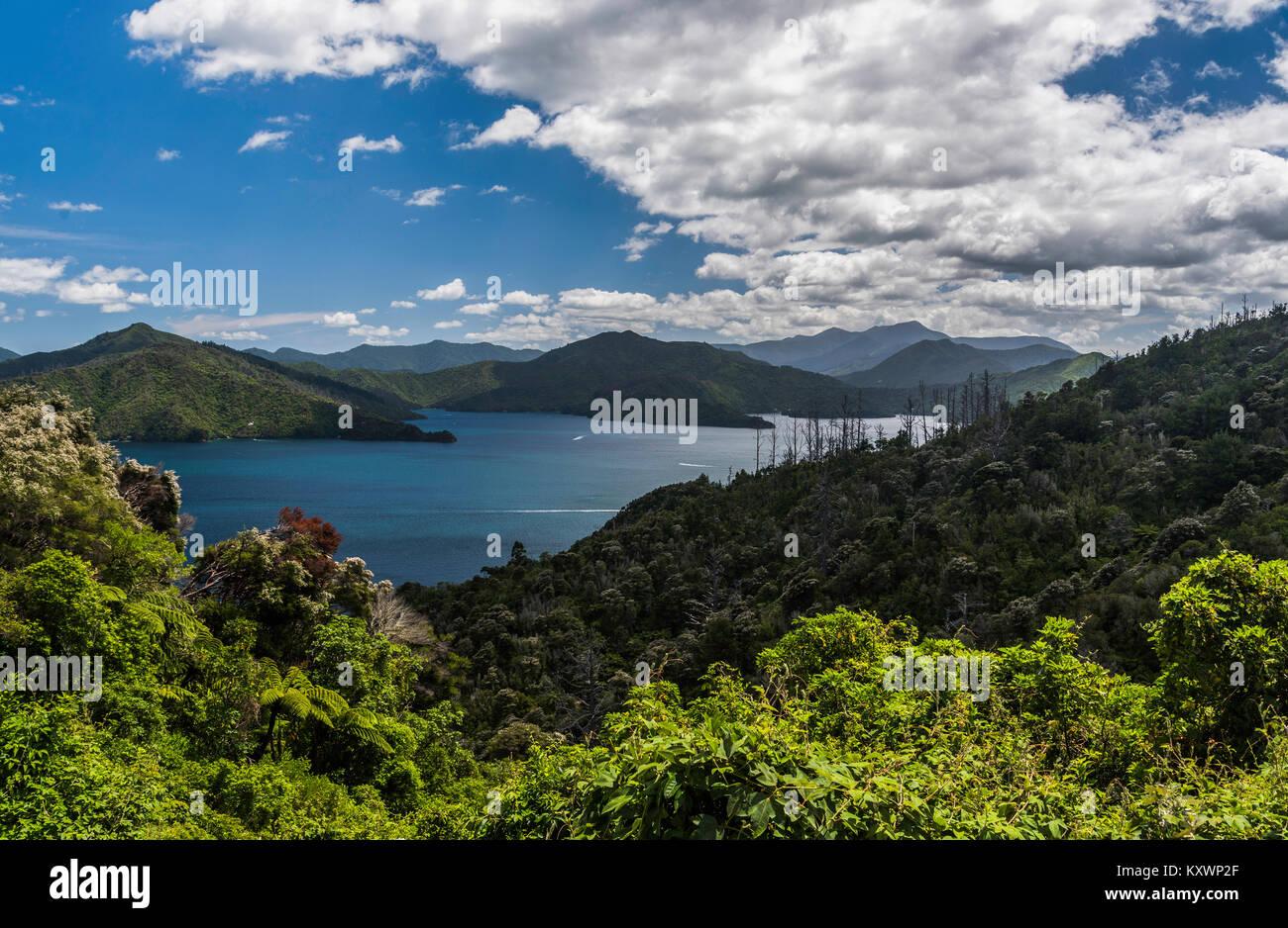 Marlborough Sound at Queen Charlotte drive, Marlborough, New Zealand - Stock Image
