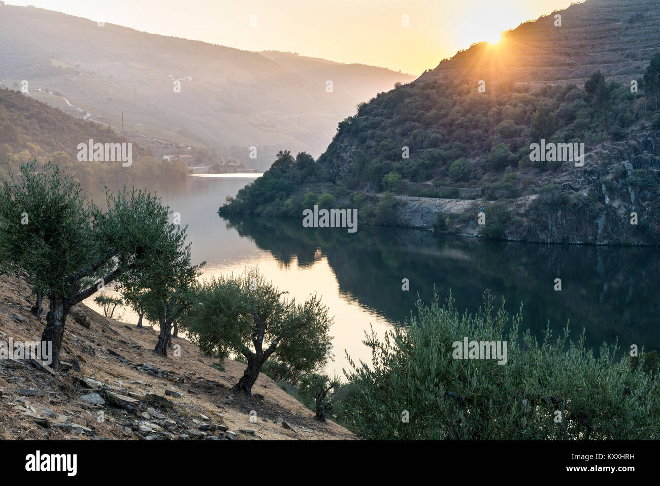 The River Douro at sunset between Folgosa and Pinhao. In the Alto Douro wine region, Northern Portugal - Stock Image