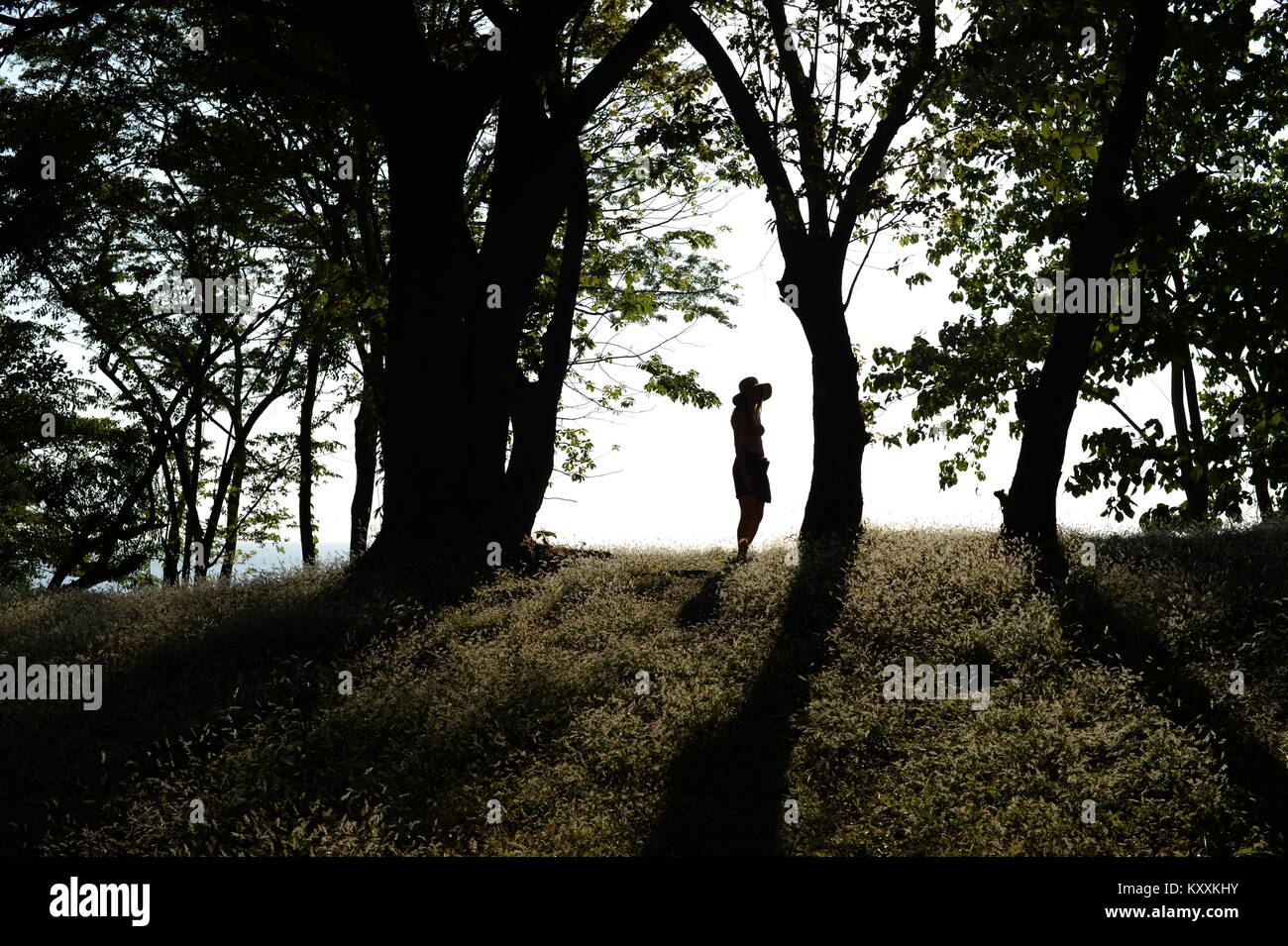 Young girl in hat silhouetted in trees on crest of hill. - Stock Image
