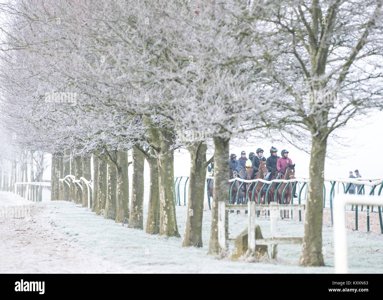 Racehorses Newmarket Winter - Stock Image