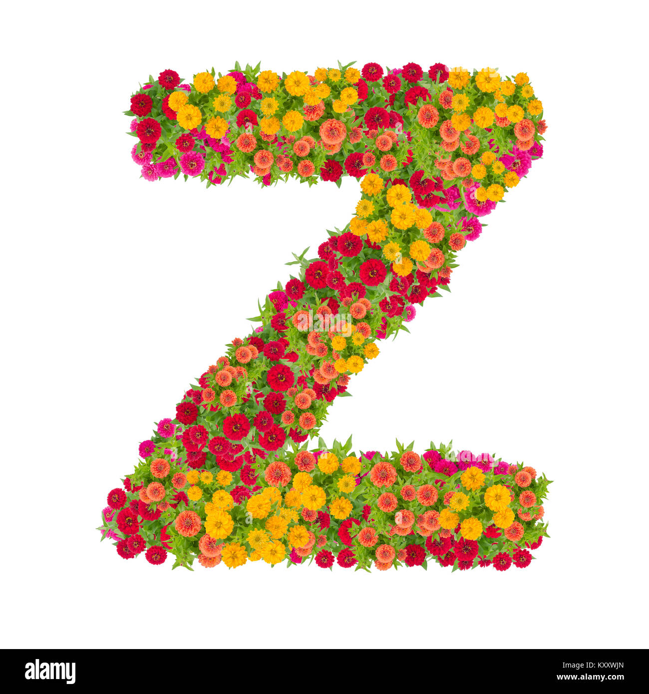 Letter Z alphabet made from zinnia flower ABC concept type as Stock