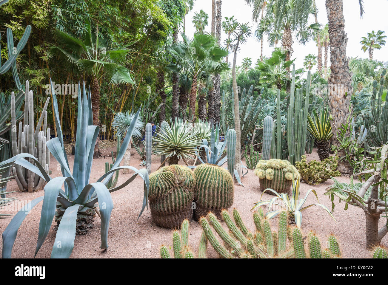 MARRAKECH, MOROCCO - FEBRUARY 22, 2016: The Majorelle Garden is a botanical garden and artist's landscape garden Stock Photo
