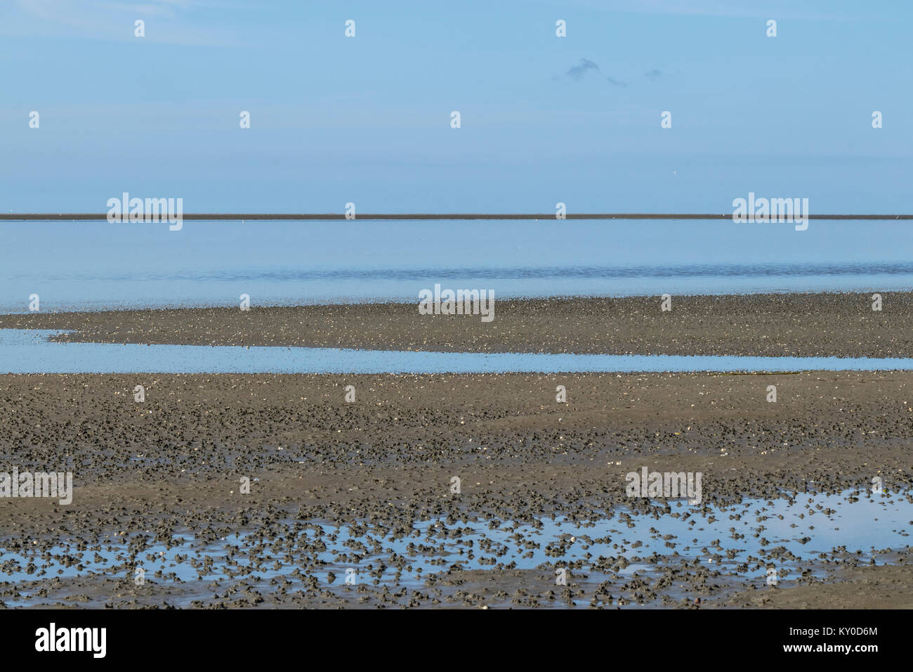 Cast of defaecated sediment of Lugworms (Arenicola marina) at low tide on the tidal flats at Mandoe - Stock Image