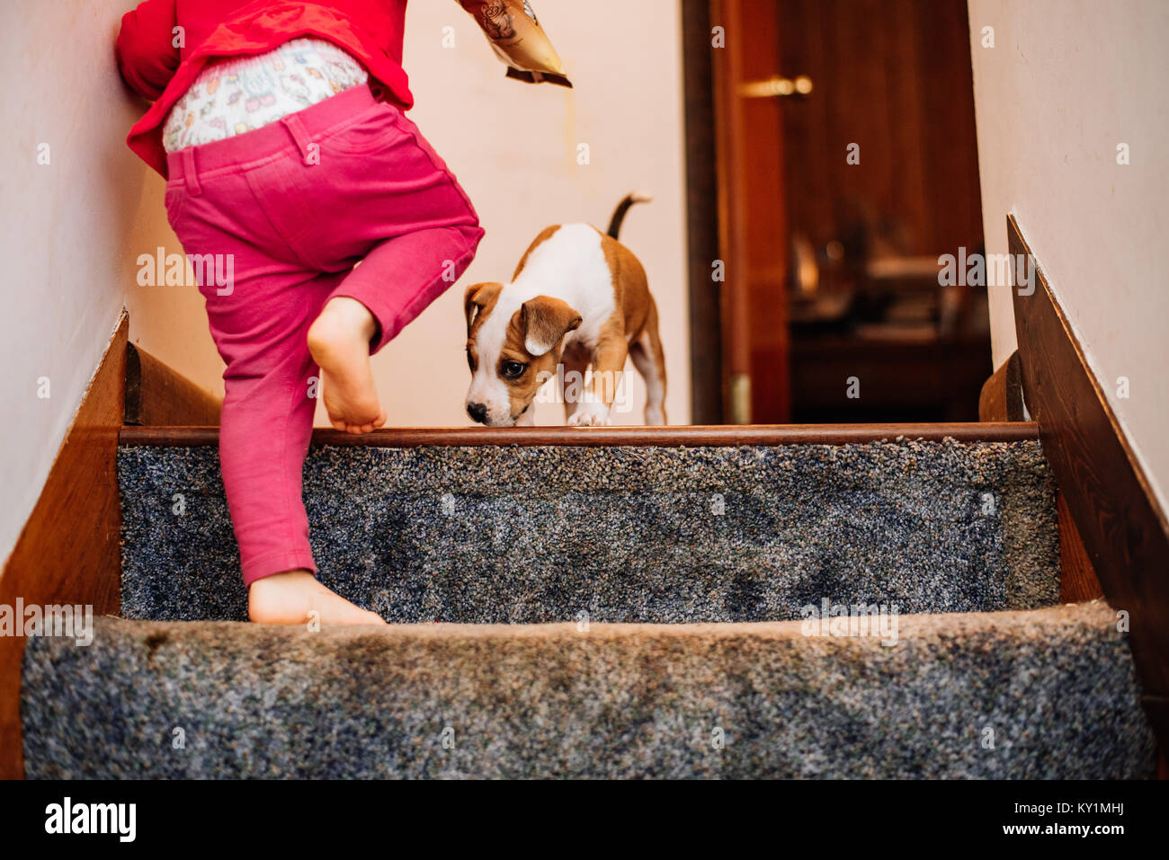 A little girl walks up a flight of stairs where a puppy sits at the top. - Stock Image