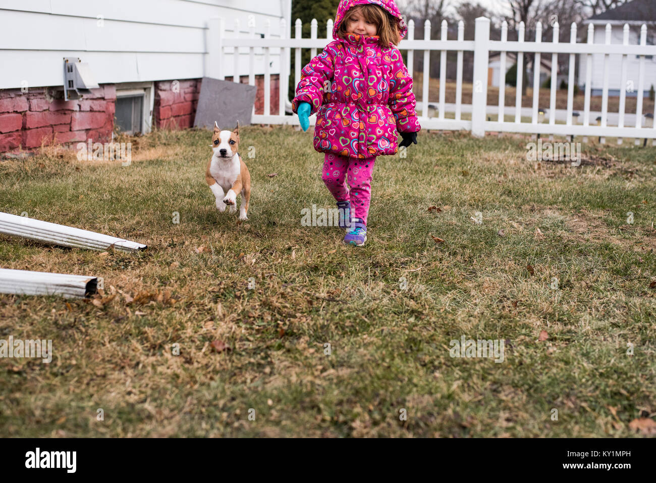 A small beagle mix puppy walks with a toddler girl in a yard. - Stock Image