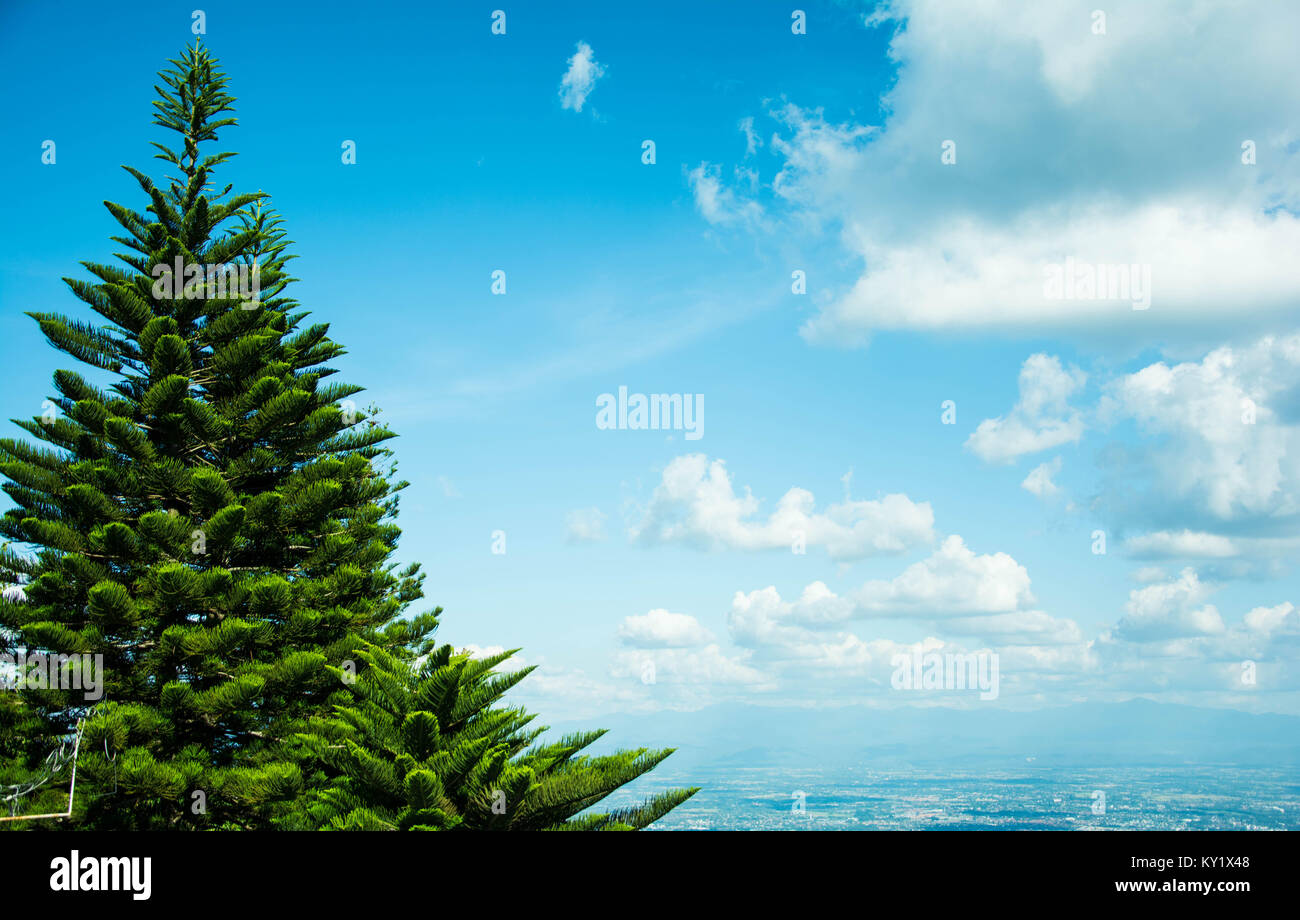 the view of a pine tree among the blue sky with the white clound at the picture's right side. I recommend that - Stock Image