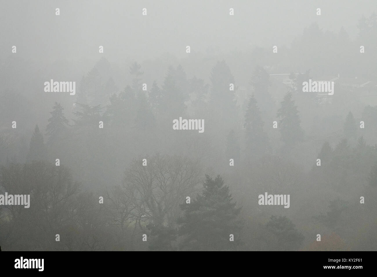 Crooksbury Hill, Farnham. 12th January 2018. Calm and misty conditions over the Home Counties this morning prior - Stock Image