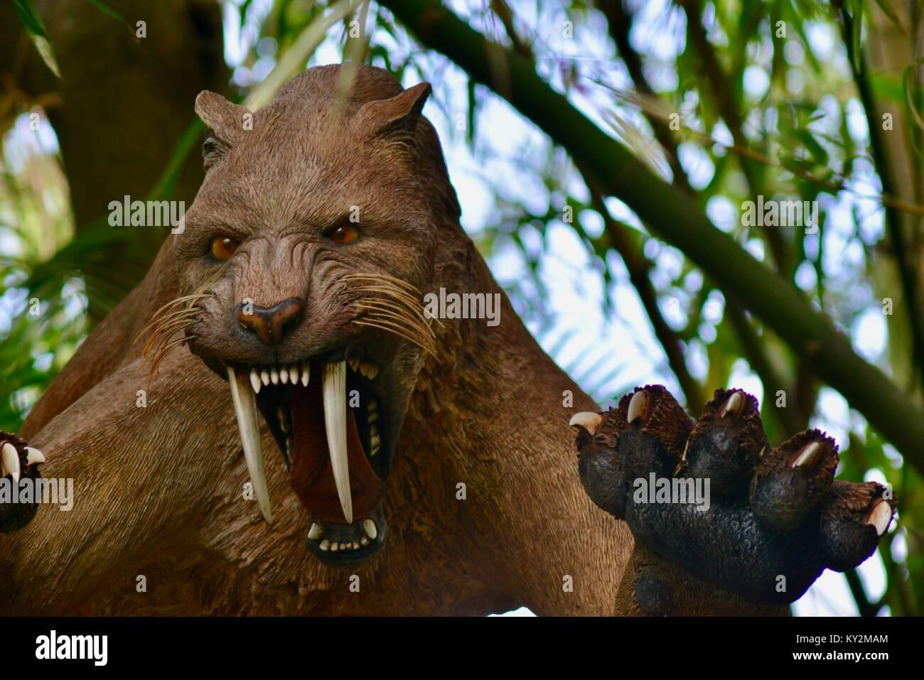 Sabre toothed tiger snarling, Australia Zoo, Beerwah, Queensland, Australia - Stock Image
