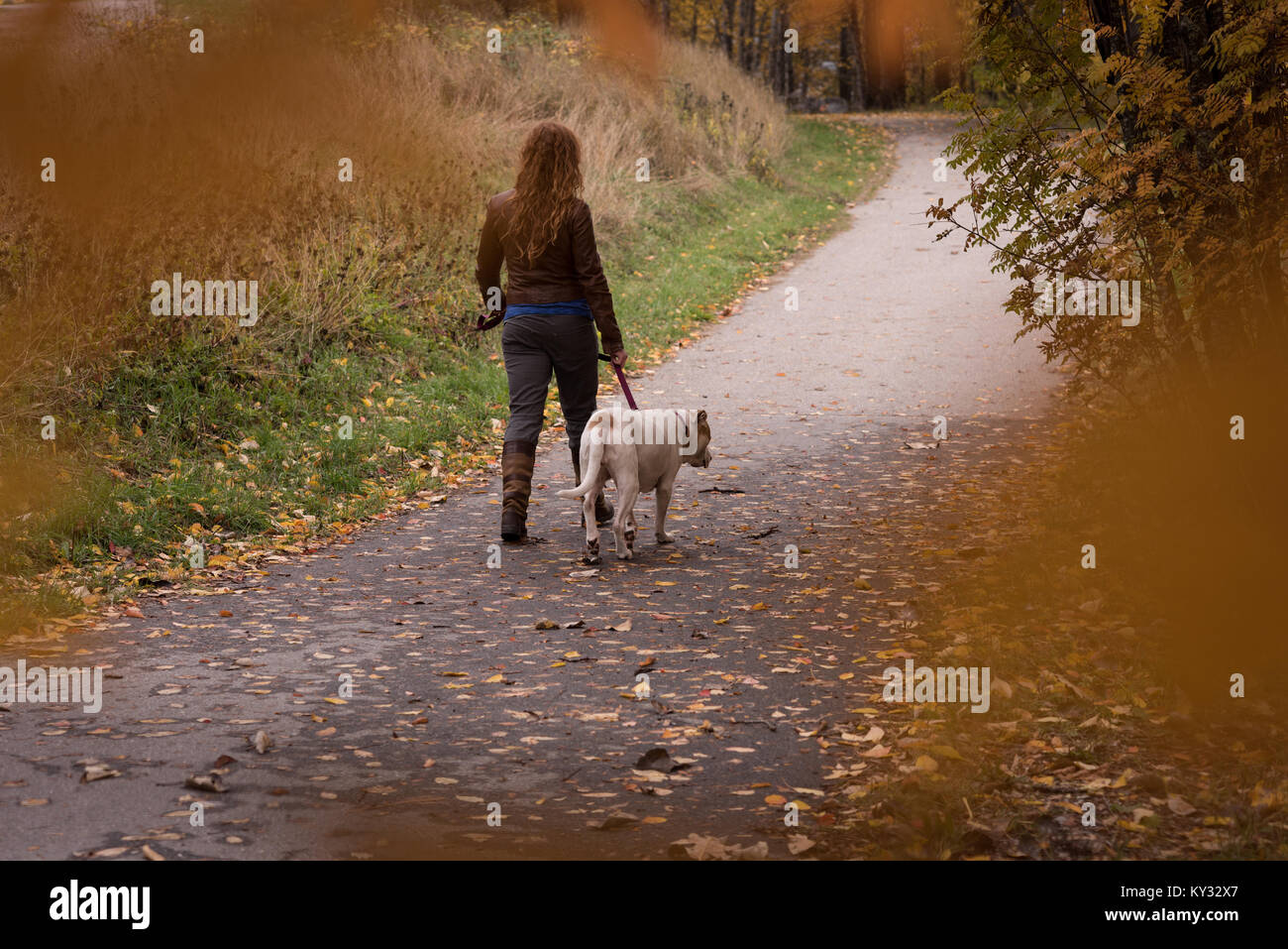 Woman walking in the park with her pet dog during autumn - Stock Image