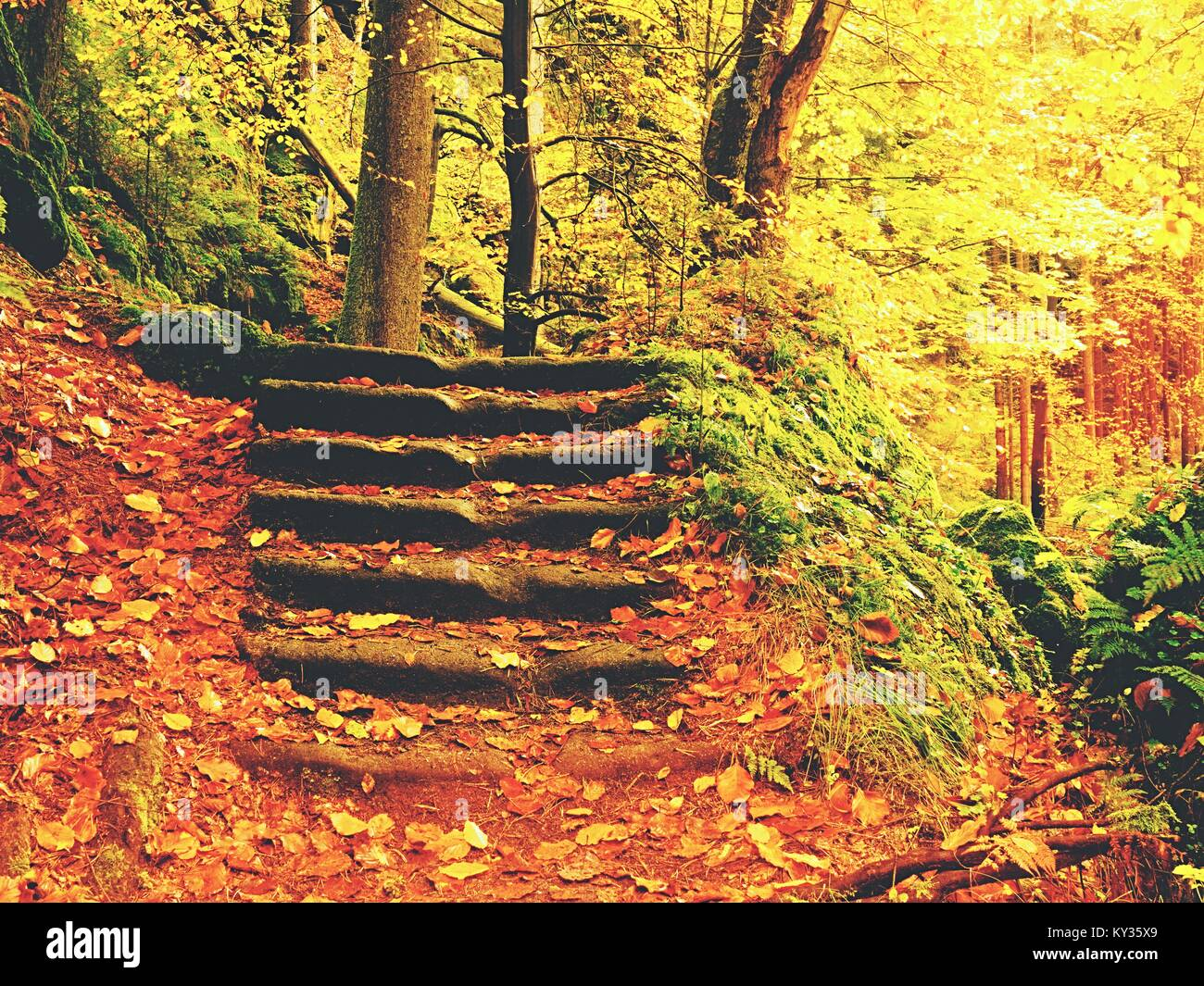 Stony steps. Beautiful landscape with wild river in autumnal forest. Tranquil scene with river. - Stock Image