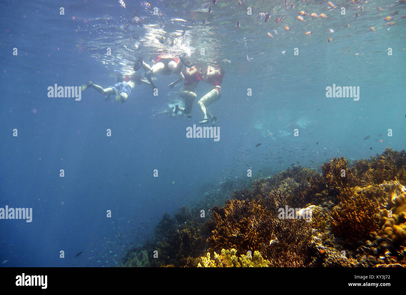 Diving and snorkeling in Menjangan island in west side of Bali. - Stock Image