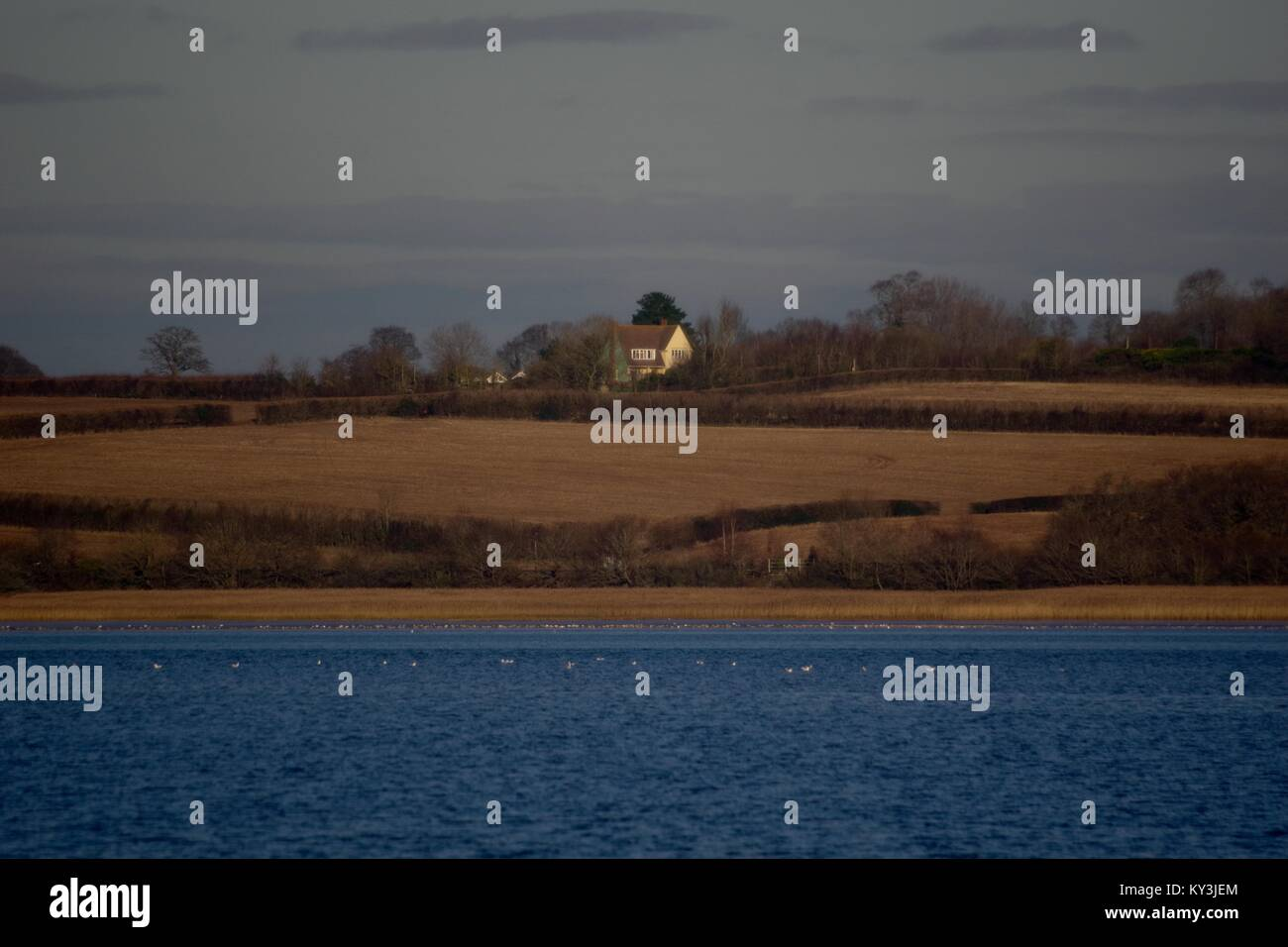 Farm House among Winter Fields of the Patchwork English Countryside beyond the Exe Estuary, from Turf Hotel looking - Stock Image
