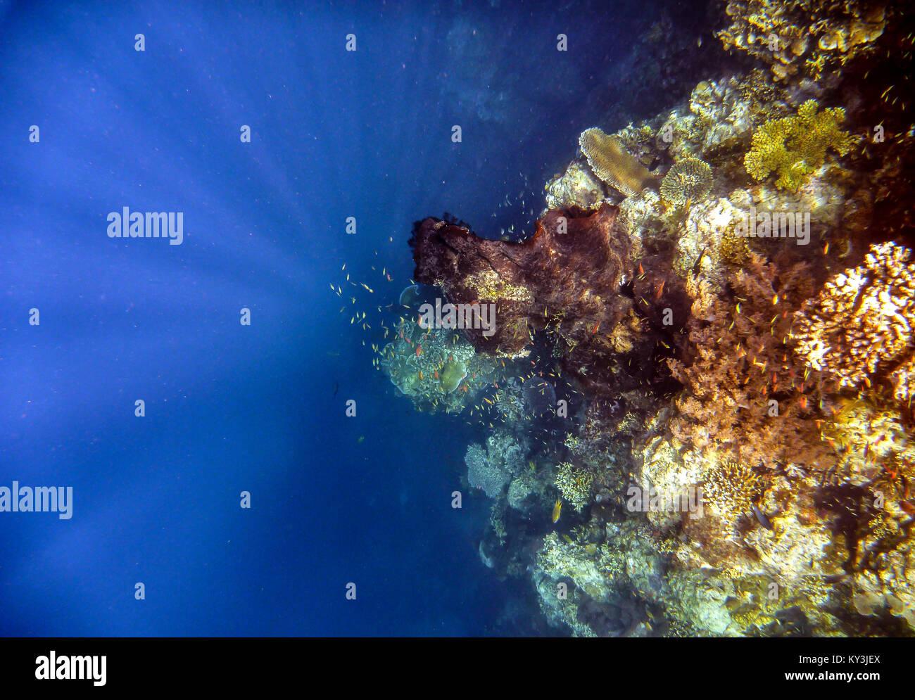 Coral reef of Menjangan island in West Bali National Park. - Stock Image