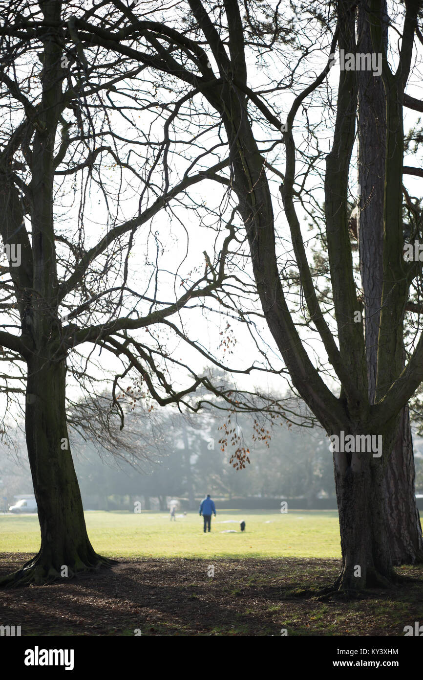 Portrait shot capturing one man and his dog walking, in the distance, in Brinton Park, Kidderminster on a cold, - Stock Image