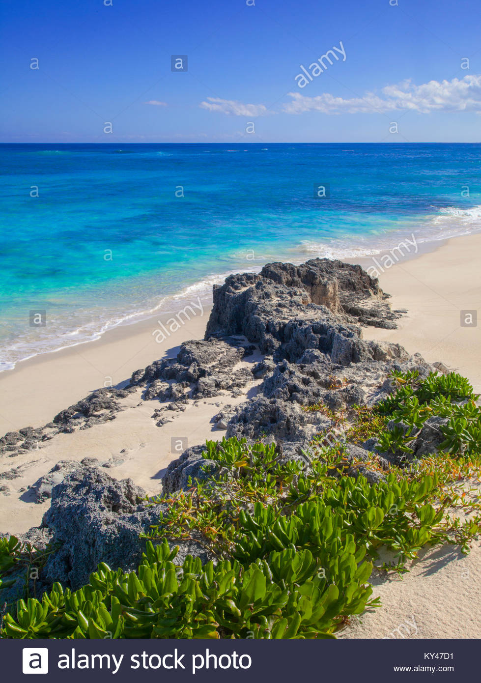 6204-1035  Copyright:  George H.H. Huey   Beach at Elbow Cay with seagrape (Scaevola sericea) Abacos, Bahamas. - Stock Image
