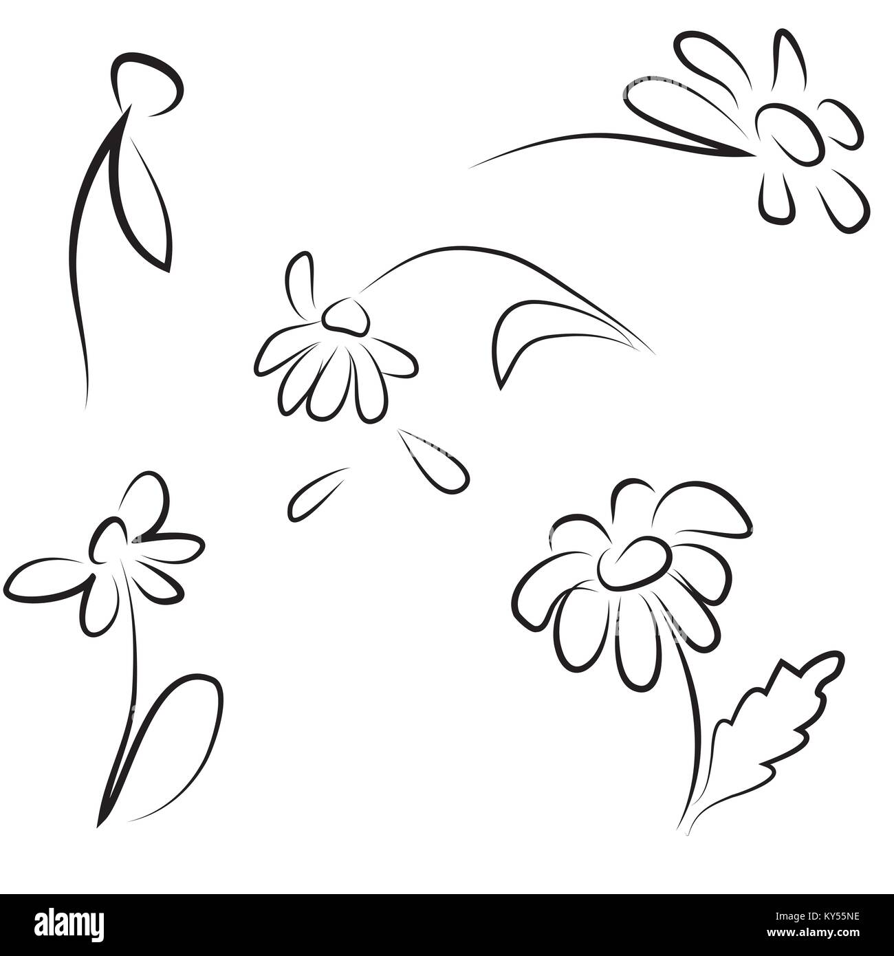 Hand contour drawing of daisies - Stock Image