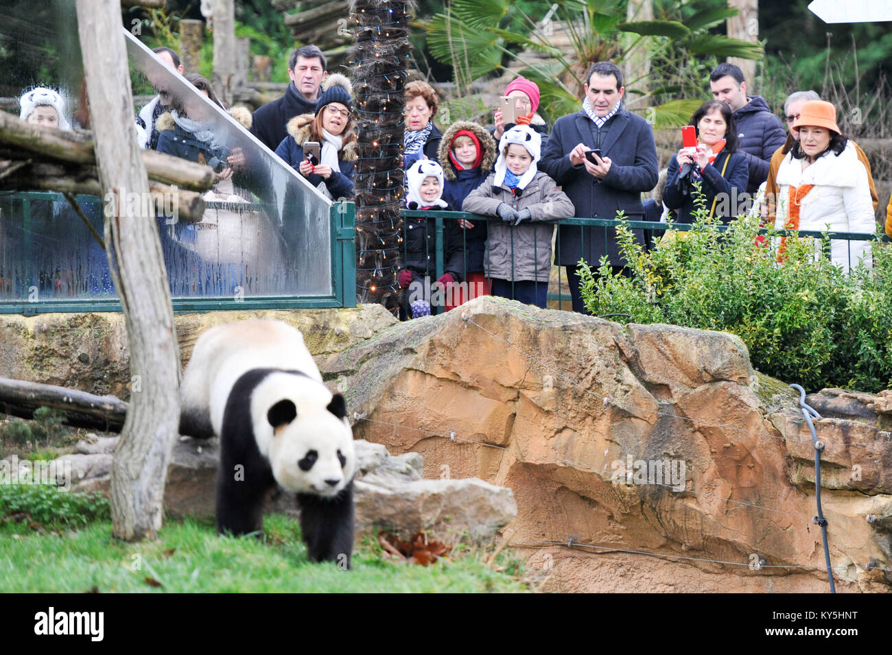 Saint Aignan. 13th Jan, 2018. Visitors watch the male giant panda 'Yuan Zi', the father of the panda baby - Stock Image