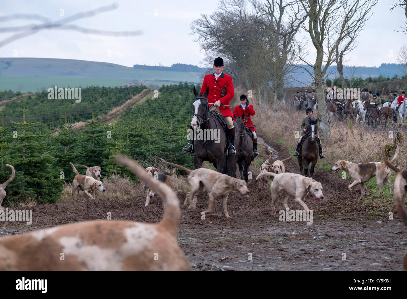 Ancrum, Rawflat /, UK. 13th January, 2018. Buccleuch Foxhounds at Rawflat, near Ancrum Caption: Huntsman Tim Allen Stock Photo